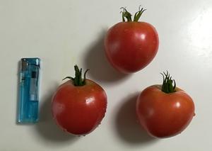 20170805_01_tomato