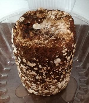 20180306_mushroom