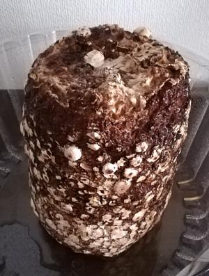 20180307_mushroom
