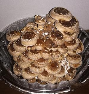 20180316_mushroom