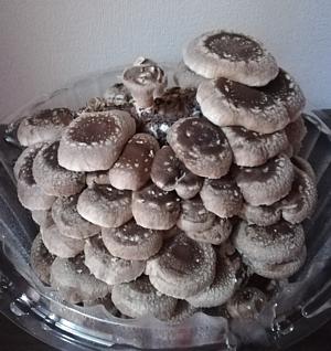 20180317_mushroom